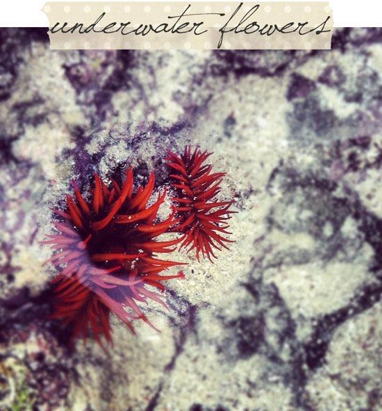 underwater-flowers