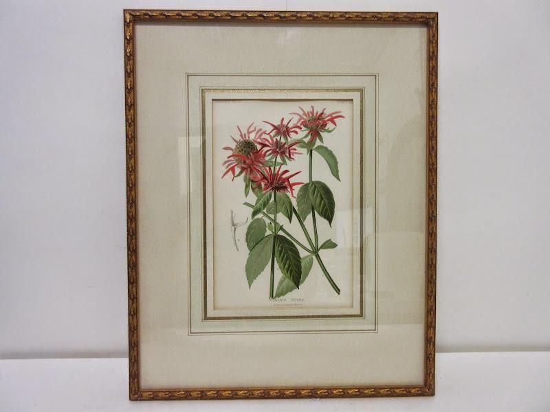 Botanical Print 2