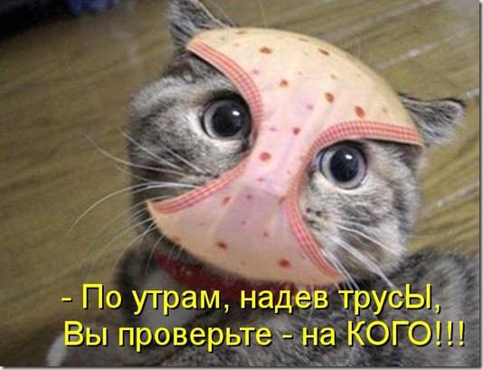 kotomatritsa_mN