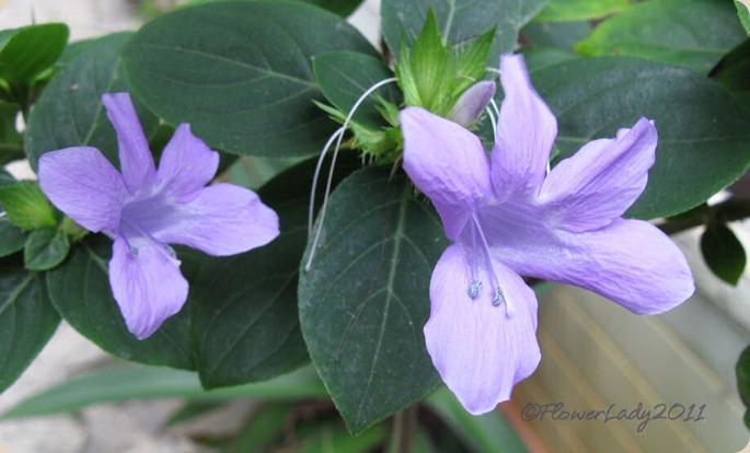 10-16-phil-violet
