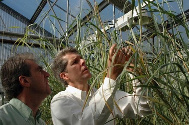 Μύκητας φιλοδοξεί να αντικαταστήσει το πετρέλαιο στην παραγωγή προϊόντων από πλαστικό