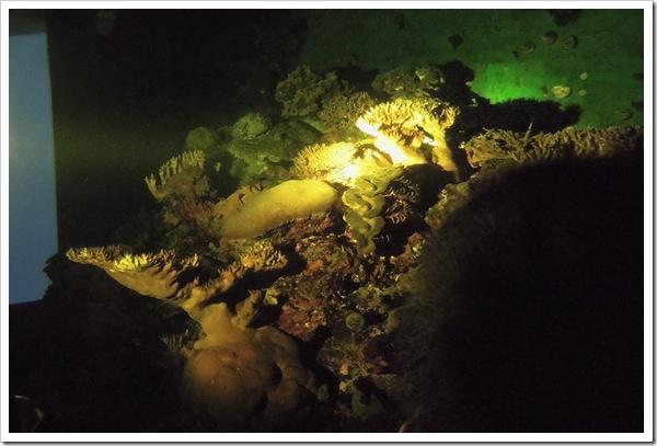 夜探珊瑚王國