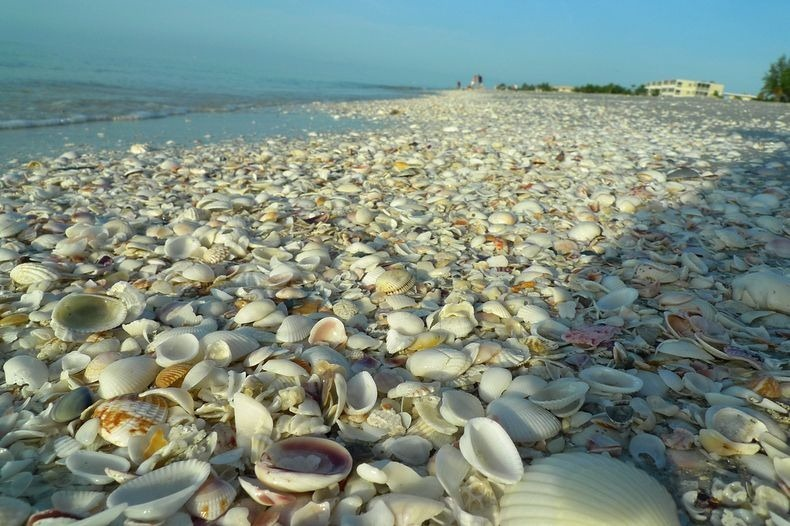 sanibel-shell-2