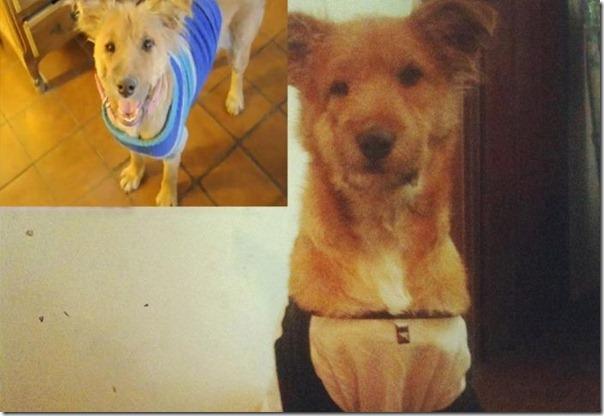 História incrível do salvamento de um cão (17)