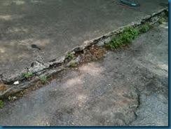 weeedy concrete