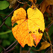 Leaf in fall.jpg