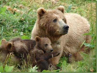 mama_bear_with_cubsx-300x225