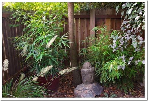 121023_Pseudosasa-japonica- -Fargesia-robusta