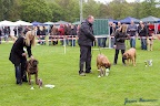 20100513-Bullmastiff-Clubmatch_30998.jpg