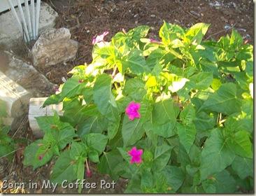 Garden stuff - Nov 2011- Fall mushroom 031
