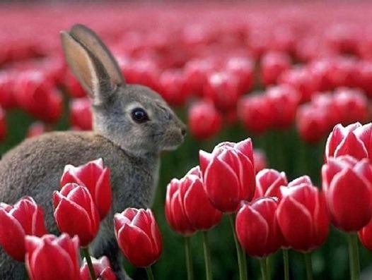 primavera_014