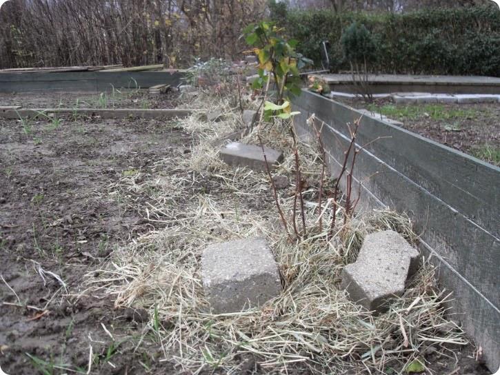 Haven i vinterklæder