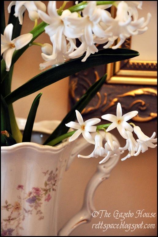 Liliacs, daffodills, cyclamen 024