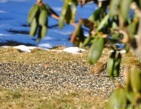 6. beneath the rhodedendron bush-kab