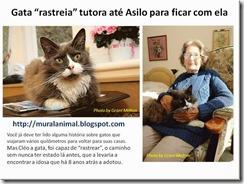 Gata rastreia_thumb[1]
