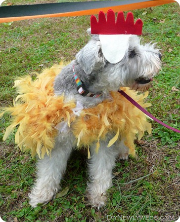 dog-chicken-costume