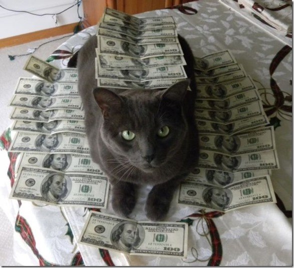 rich-wealthy-cats-6