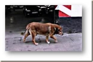 canelo perro ateismo
