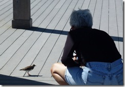 Nancy- Bird Whisperer