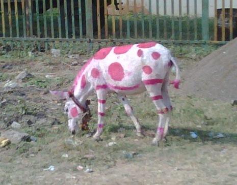 pink dot donkey