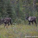 Kanada_2012-09-04_1885.JPG