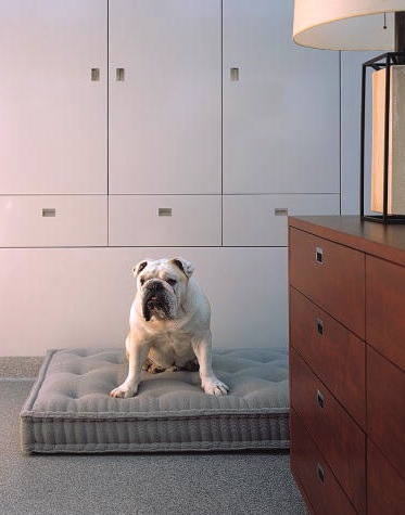 This is such a smart looking dog bed. (Martha Stewart Living)