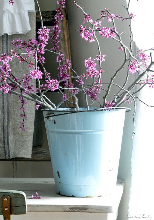 enamel bucket redbuds