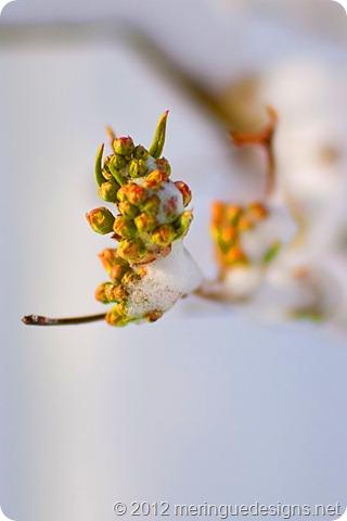 photo 4x6 spring snowstorm