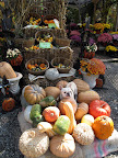 How do I look amidst all of these unusual pumpkins and gourds?