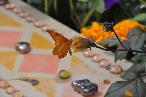 2009 Butterfly Show @ Krohn Conservatory