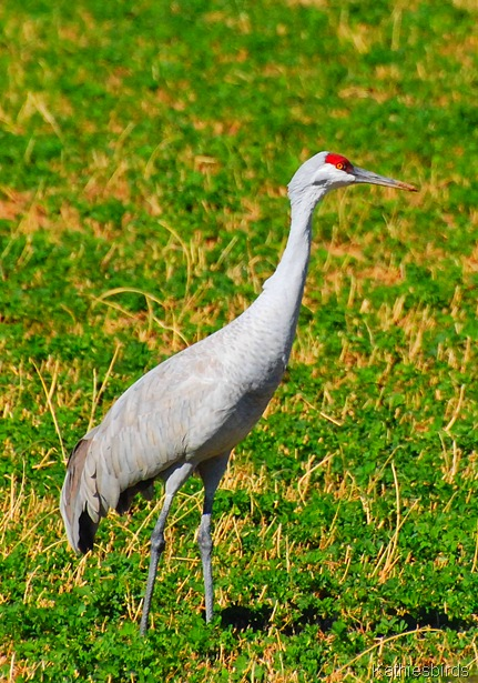 27. crane-kab