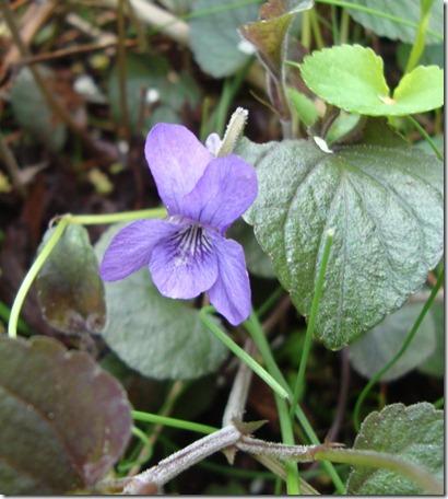 violetweb