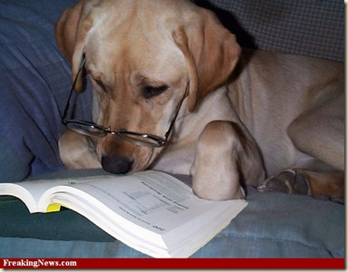 Dog-Reading-Book--53514