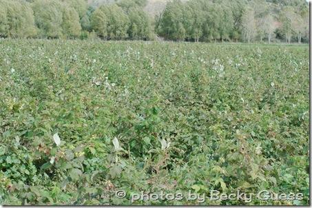 10-05-11 raspberry farm near Mora NM 07