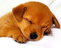 dog taking nap