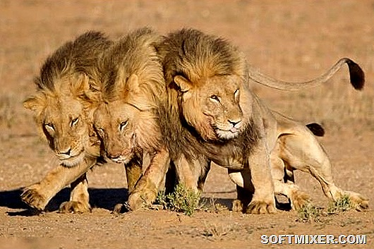lions-after-night-party-001