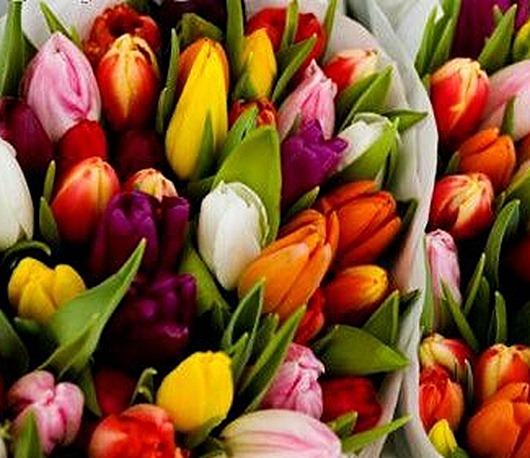 Лилии  каталог лучших сортов Продажа лилии  почтой по