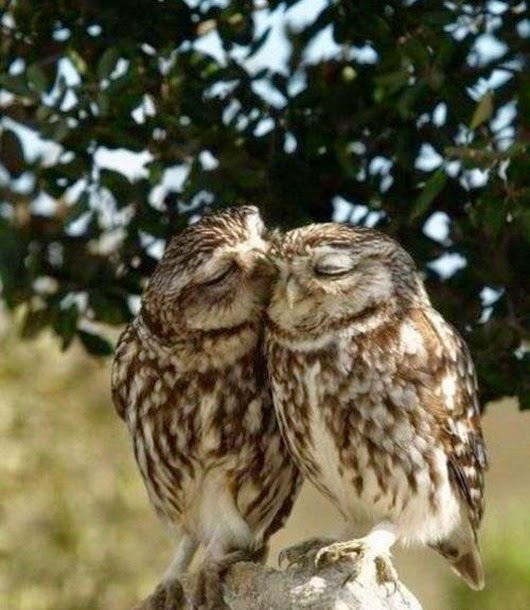 animal-love-8