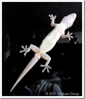 Geckowindowp1020813