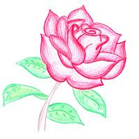 rosa colorida.jpg