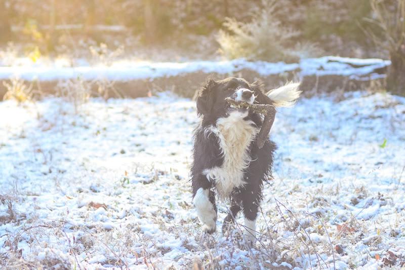 snow dog-3520