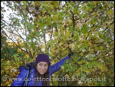 Passeggiando per Padulle - novembre 2013 (42)