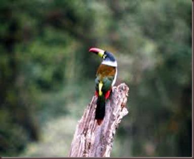 Amazing Pictures of Animals photo Nature exotic funny incredibel Zoo, Ramphastidae, Toucan, Bird, Alex (19)