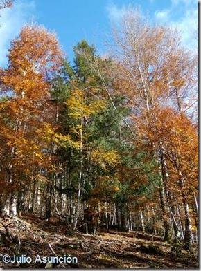 Selva de Irati - Tejo monumental de Auztegia