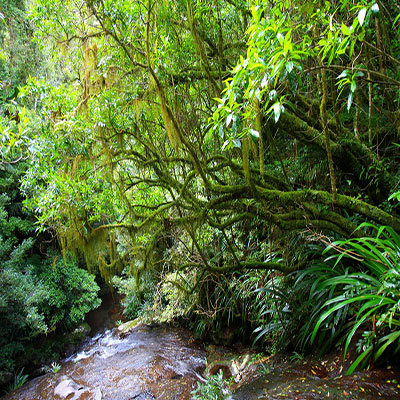 Coomera Creek, Lamington National Park