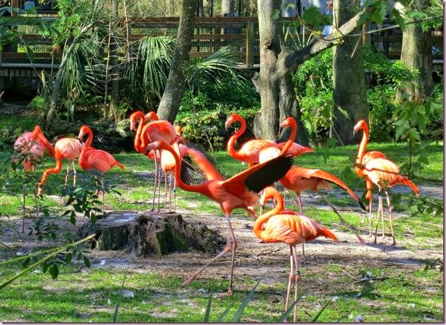 flamingoIMG_1843