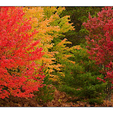 Autumn Blaze / Hiawatha National Forest / Upper MI.