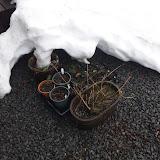 雪がとけて鉢が出てきた