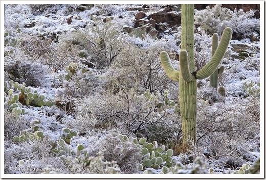 150101_TucsonMtPark_0055