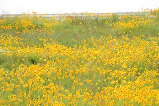 堤体に咲く花々